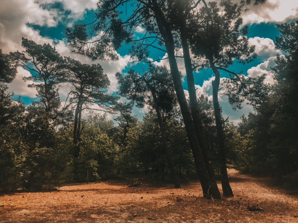 Wandelen op de Vrachelse Heide